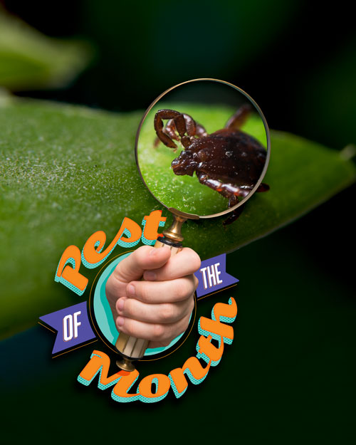 Pest of the Month: Ticks