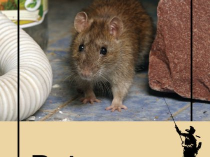 How Did Non-Native Rats Become Abundant In Upstate New York? And Why Are They Unusually Aggressive Pests?
