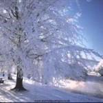I hatge Winter