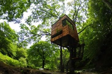 treehouse00mark