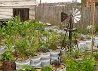 container-garden copy