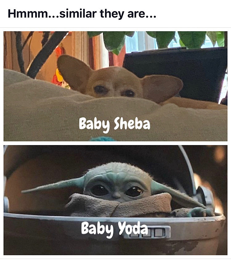 Dopl3r Com Memes Im Not Telling You To Forget Baby Yoda But