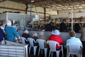 Milking demonstration
