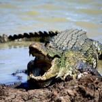 Surfer Killed By Croc In Sri Lanka