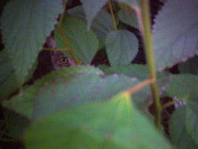 デジタルハリネズミ(初代)作例写真4