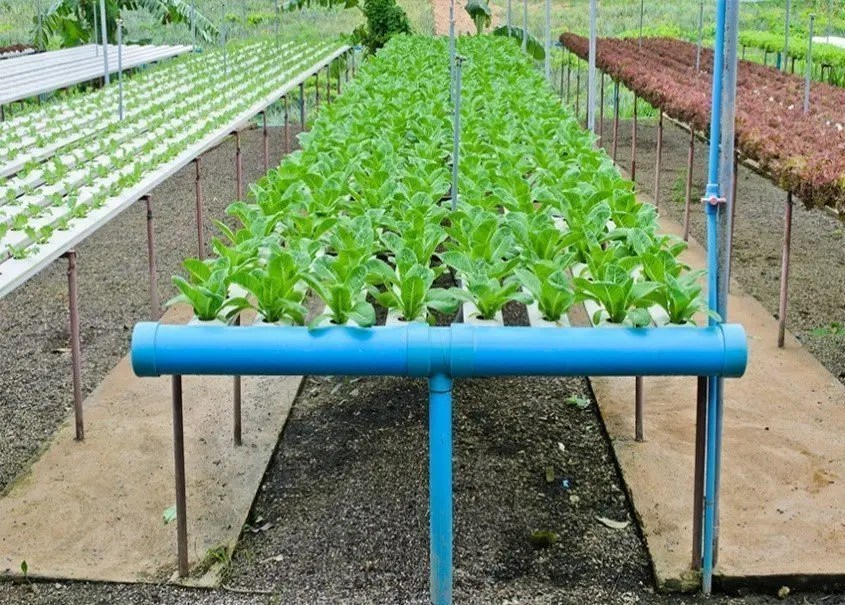 hydroponics - Project Home Page