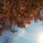 男心と秋の空?
