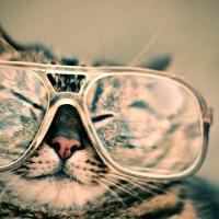 おもしろい猫(めがね)