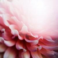 内側から発光する花