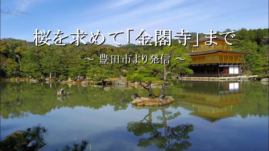 桜を求めて京都「金閣寺」までひとっ飛び【京都市】