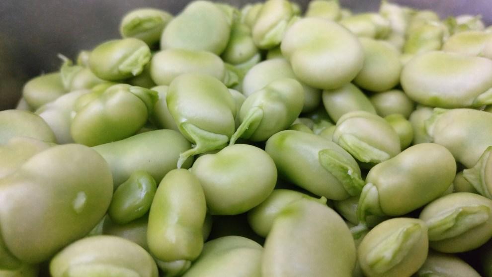 beans white judías blancas habas frijoles fagioli protein proteína ortaggio