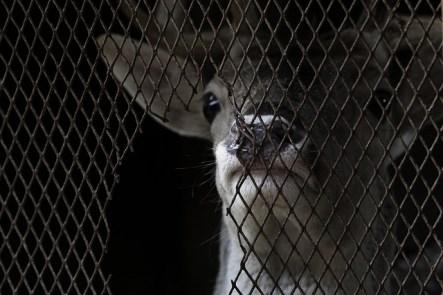 PERCHÉ NON DOVRESTI AVERE UN SERPENTE COME ANIMALE DOMESTICO