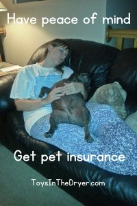 Pet Insurance Provides Peace of Mind