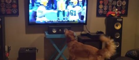 dog_excited_american_football