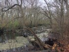 Flooded woods