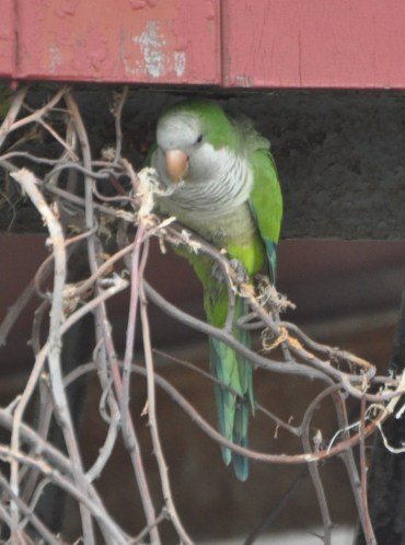 Gathering nest material