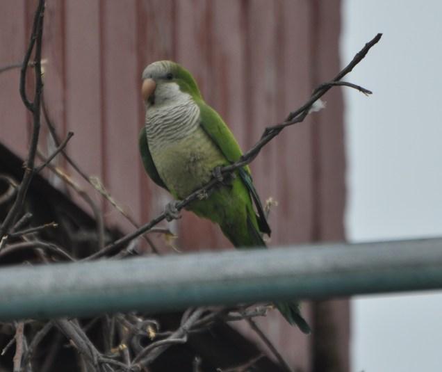 Prime perch