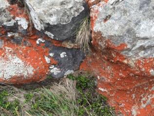 I'm lichen this color