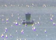 Bobbing booby buoy