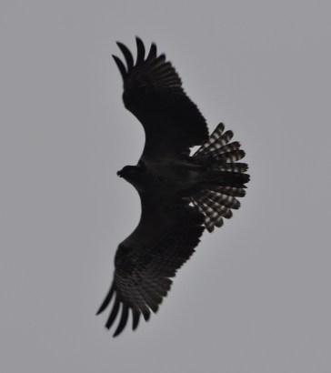 Shadowed wings