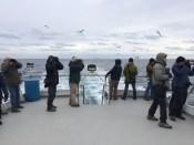 Scanning seabirders