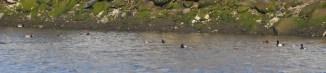 Distant ducks