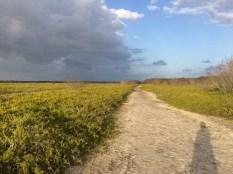 Day's end on the coastal prairie