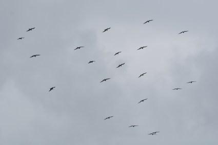 A fleet of Frigates