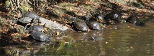 The Turtle Club