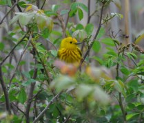 A bird in the bush