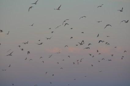 Twilit wings