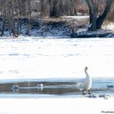 CT river frozen 2015