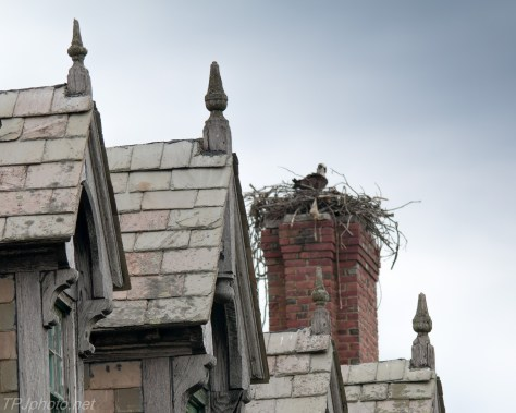 Abandon Spires with Osprey Click For Full Size