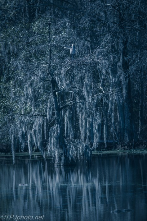 Dark Cypress Tree Swamp - Click To Enlarge