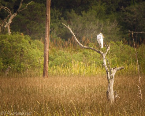 Egrets In A Different Light - Click To Enlarge