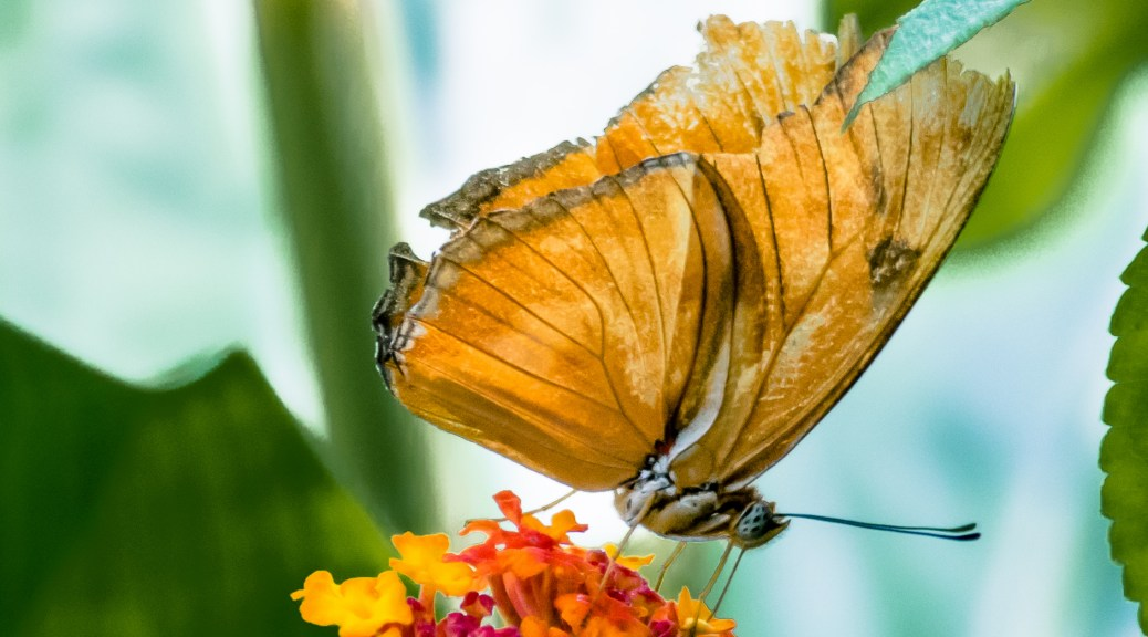 Butterfly Flitterly - Click To Enlarge