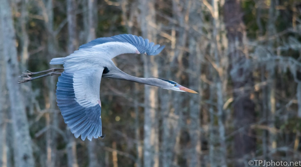 Heron Fly By - Click To Enlarge