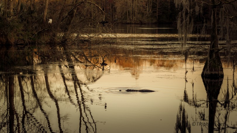 Evening In A Swamp - Click To Enlarge