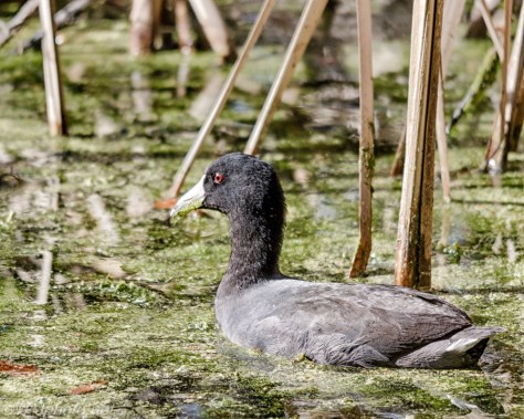 You Old Coot - Click To Enlarge