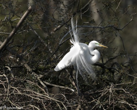 Egret Displays - Click To Enlarge