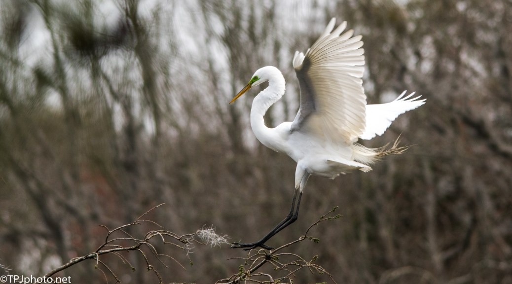 The Egret Has Landed - Click To Enlarge