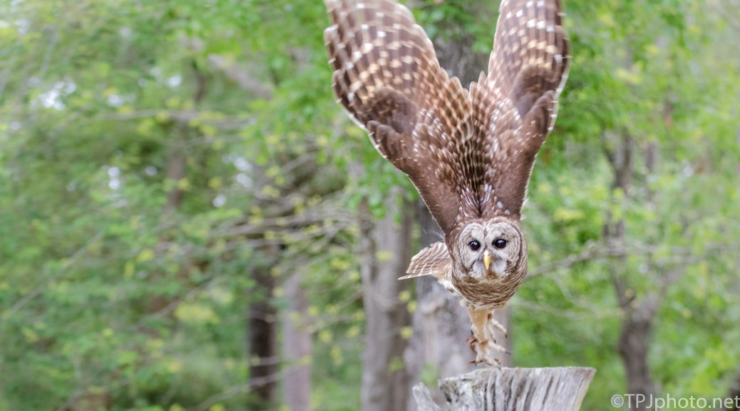 Owl, Unexpected Turn - Click To Enlarge