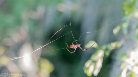 Spider Season In The Swamps - Click To Enlarge