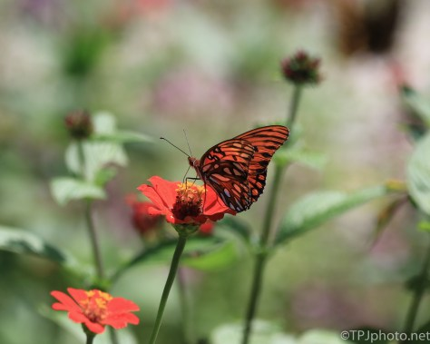 Butterfly - Click To Enlarge