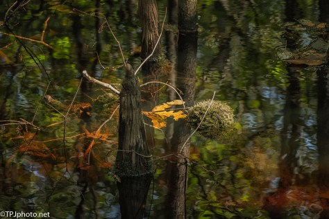 There's Great Beauty In A Swamp - Click To Enlarge