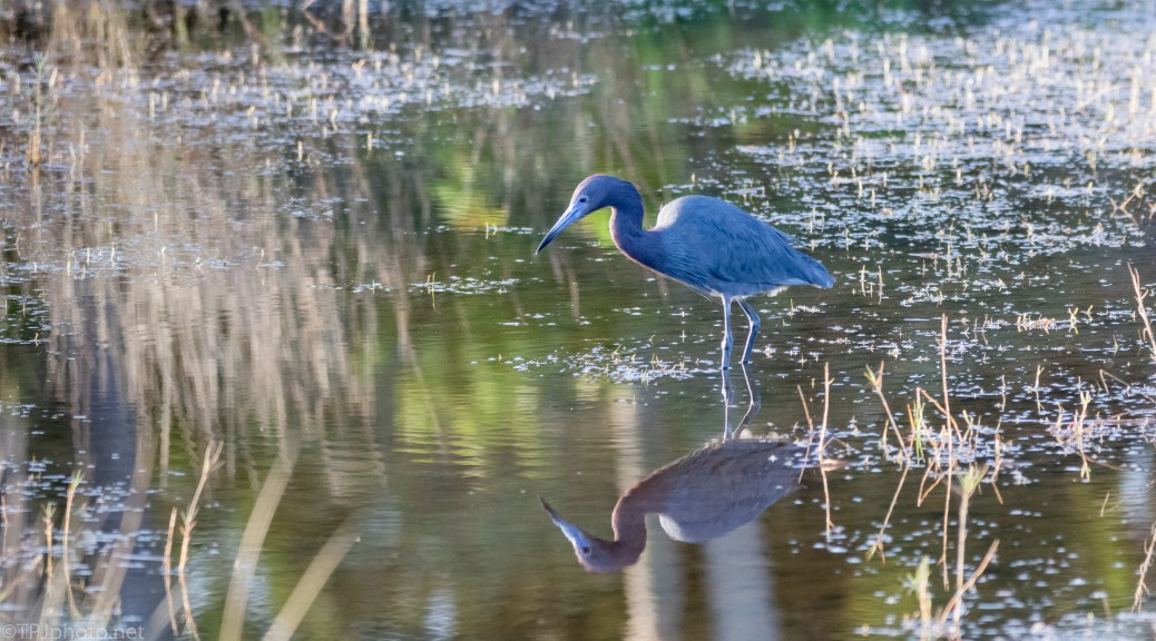 Little Blue And Reflections - click to enlarge