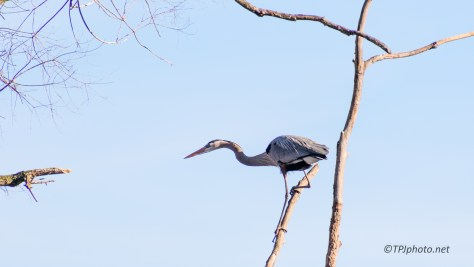 Must Be New At This, Heron - click to enlarge