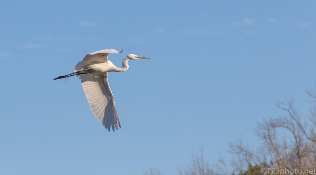 Blue Sky Egret - click to enlarge