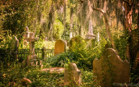 Peaceful Spot In The Middle Of Charleston - click to enlarge