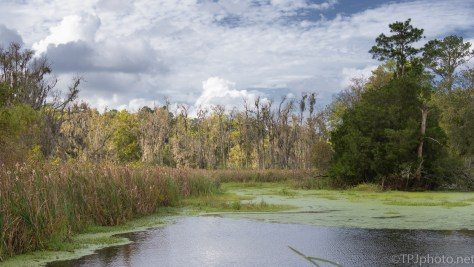 A Swamp, Three Views - click to enlarge